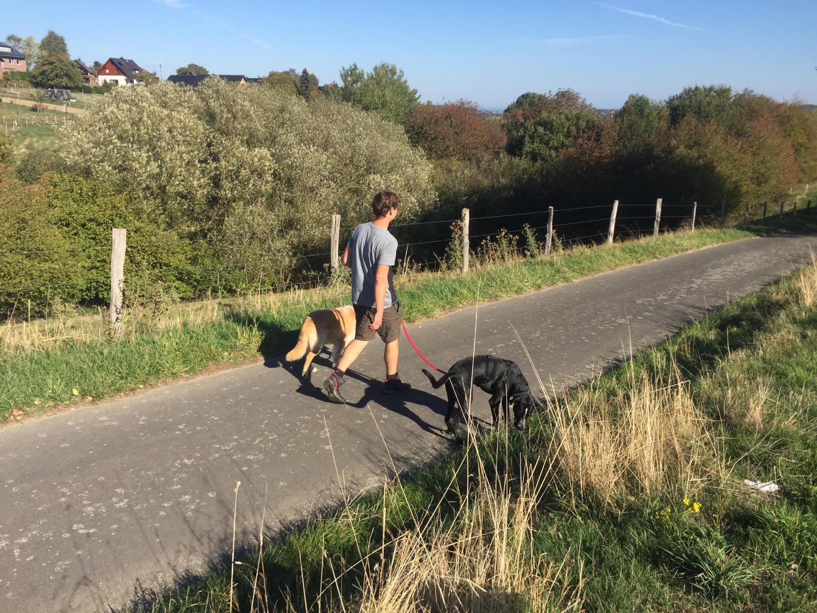 Dogwalking Eifel